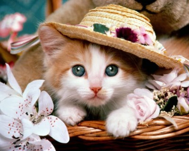 10 Ras kucing Terpopuler di Jepang