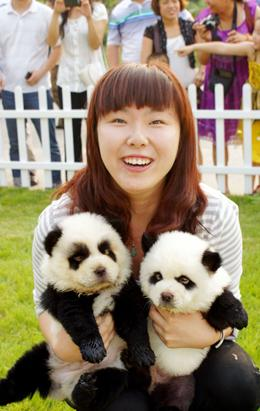 Panda Dogs Are The New Regular Dogs PHOTOS  HuffPost