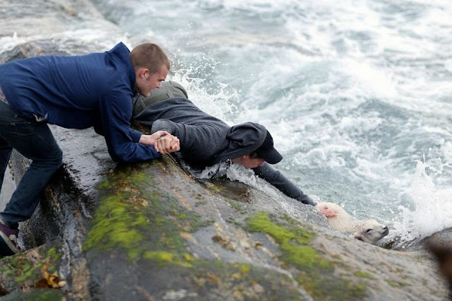 two Norwegian guys rescuing a baby lamb drowning in the ocean, helping animals, animal rescue