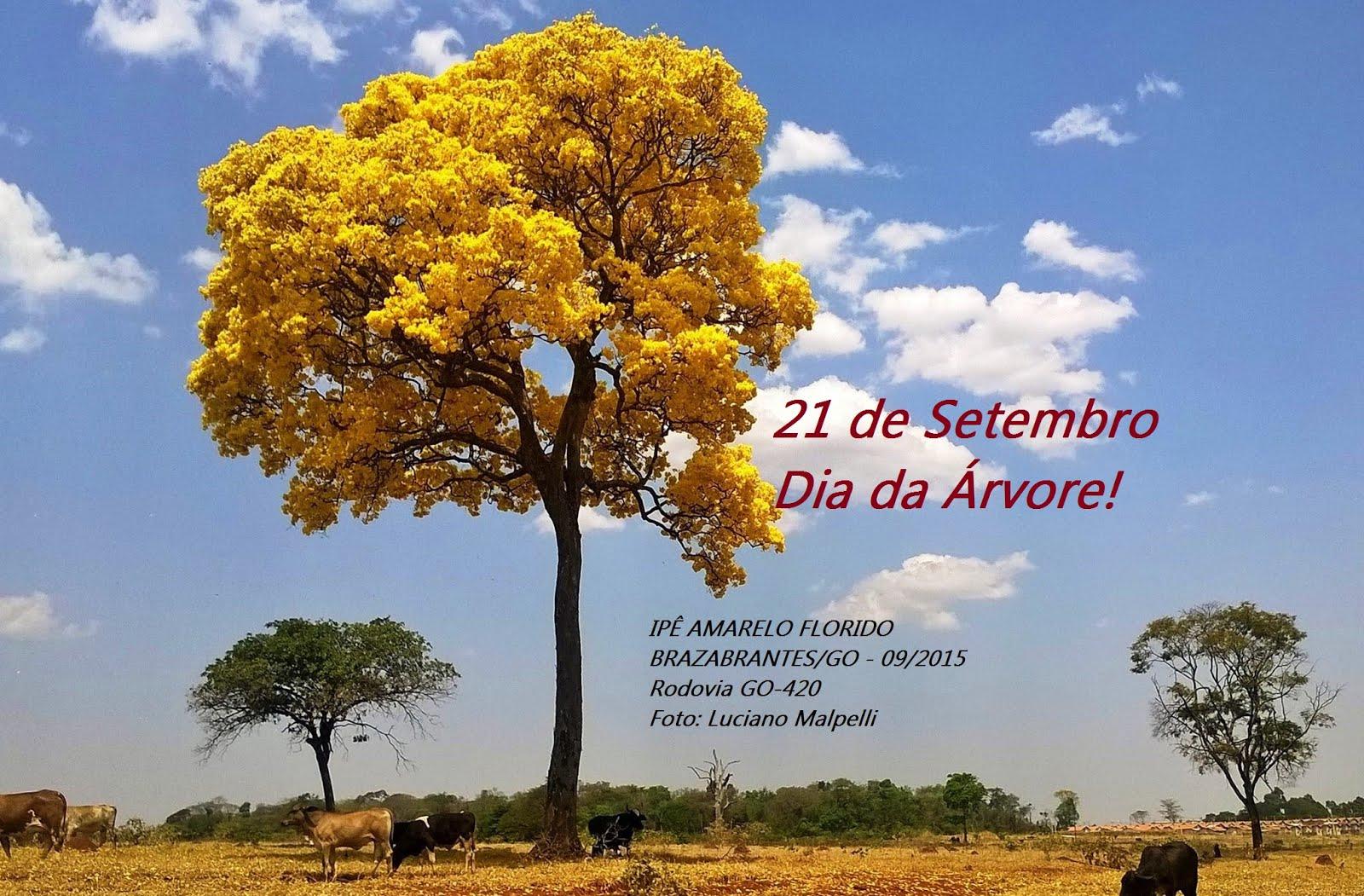 Dia da Árvore no Brasil