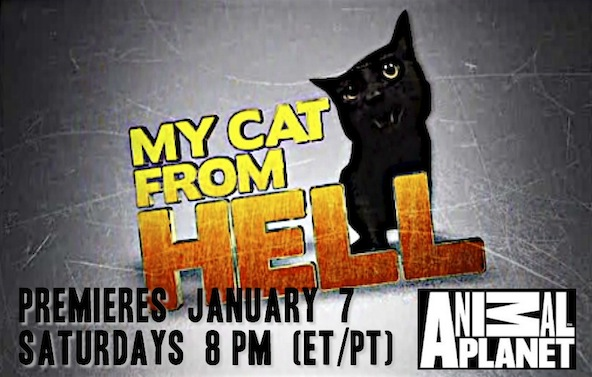 catladyland cats are funny my cat from hell 39 s jackson