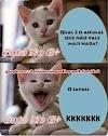 Veja algumas das piadas do gato do face mais hilárias