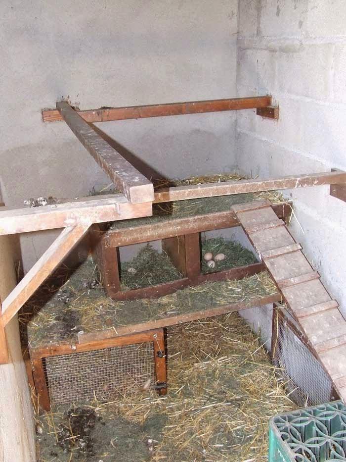 Le jardin potager espagnol vu par un jardinier fran ais for L interieur d un poulailler