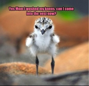 Funny Bird Pictures With Captions