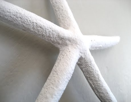 plaster starfish