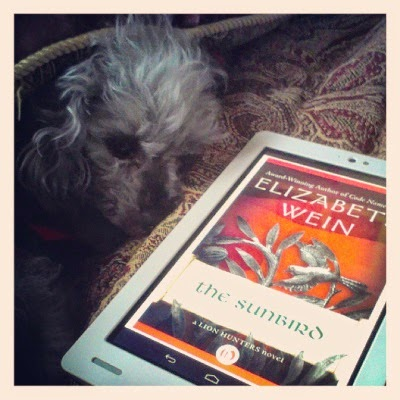 Murchie huddles under a comforter. Before him sits my e-reader with the cover of The Sunbird on its screen. It depicts a silvery metal sculpture of a bird in flight near a branch against a variegated orange background.