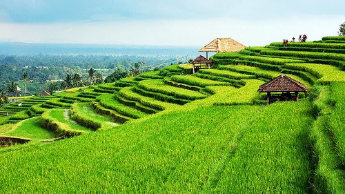 Travel to Jatiluwih rice terrace Bali Indonesia 2
