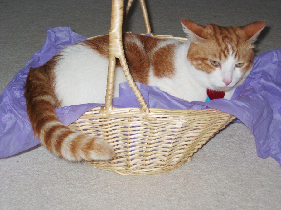 16. Cat Basket by sonyaseattle