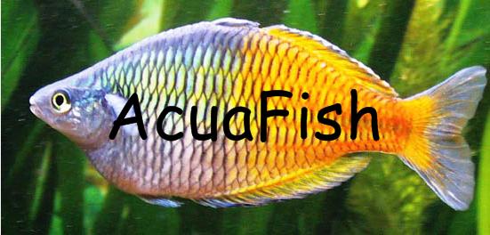 AcuaFish