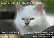 Stensereds