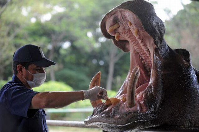 Amazing Animals At The Dentist Photos Seen On www.coolpicturegallery.us