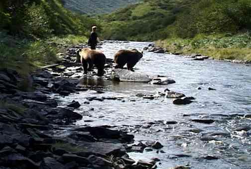 a review of the documentary film grizzly man Rarely has the never-ending struggle between humanity and nature looked so much like a one-sided battle of wits as it does in werner herzog's documentary grizzly man, the story of self-styled naturalist timothy treadwell treadwell's passion for nature led him to spend long summers camping with bear.