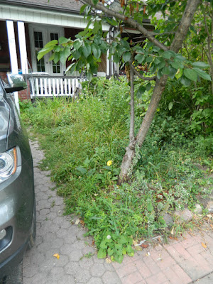 Riverdale front garden clean up before Paul Jung Gardening Services Toronto