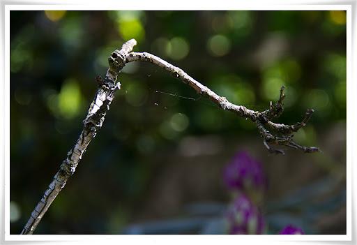 Kvist med lite spindelväv