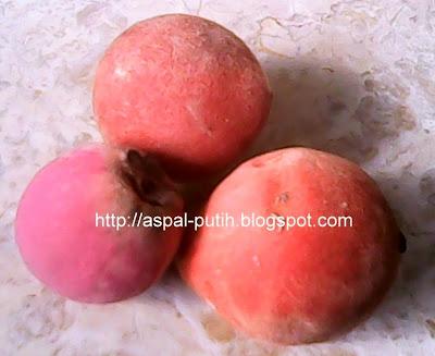 buah beludru atau bisbul