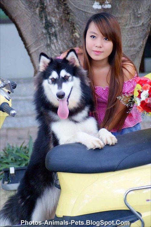 http://1.bp.blogspot.com/-jgkTPXNA1pM/TplfmIi5f7I/AAAAAAAACCg/m6wqJ-fltz0/s1600/Husky%2Bdog.jpg