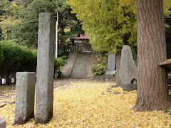 龍口寺のイチョウ