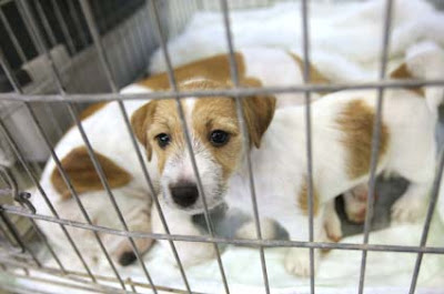 How To Crate Training Puppies Overnight