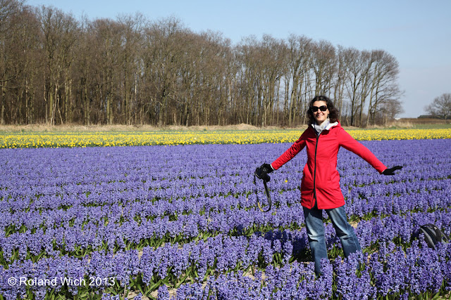 Dutch flower fields 2013