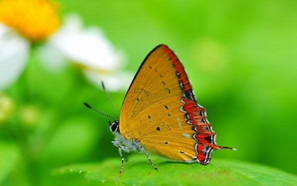 Beautiful Butterfly Wallpaper Download