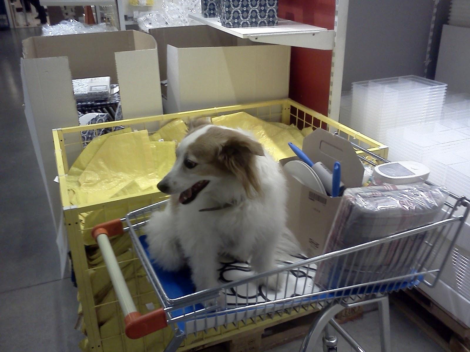 Mesfet blog ikea di padova i cani sono benvenuti - Ikea padova tappeti ...