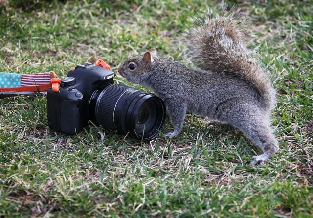 Amazing Funny and Cool Animals Seen On www.coolpicturegallery.us