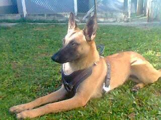 Cães da New Dog Adestramento