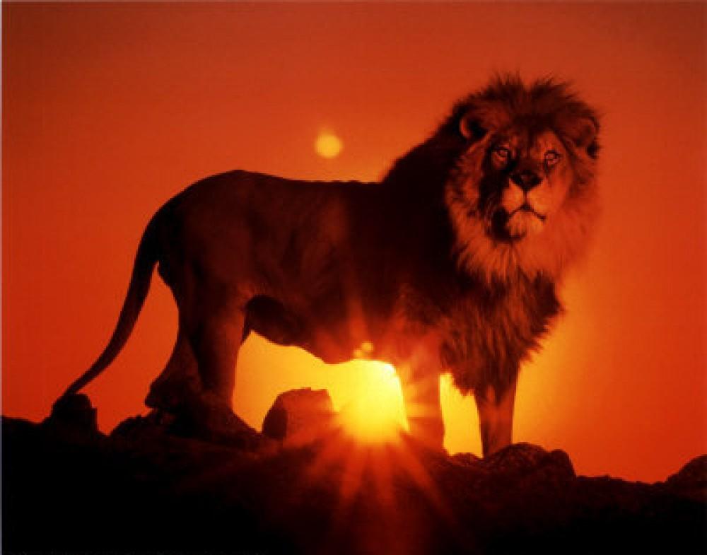 aslan resimleri