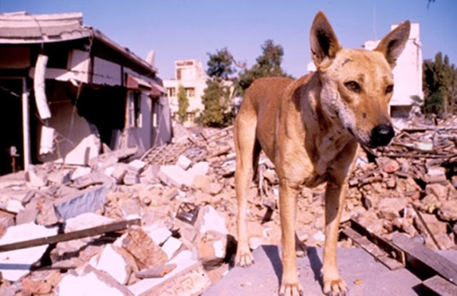 Can Animals Predict Disaster? 12 Warning Signs from Animals