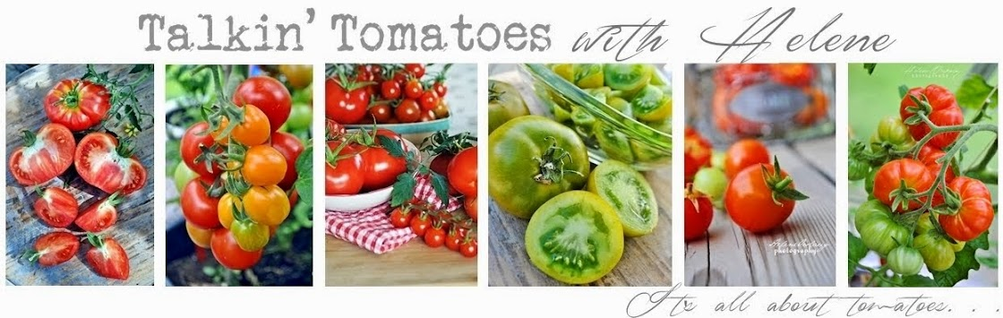 Talkin' Tomatoes with Helene