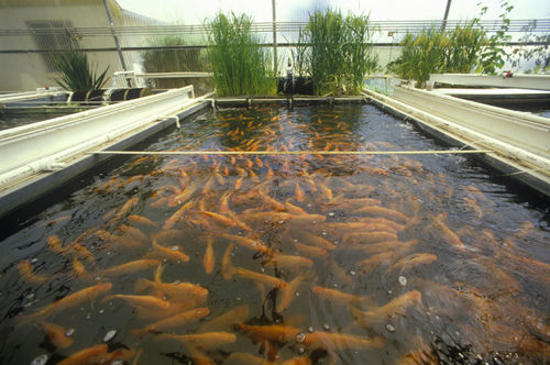 ... Do you feel that the place that you have would be a great fish farm