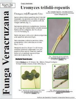 Uromyces trifolii-repentis