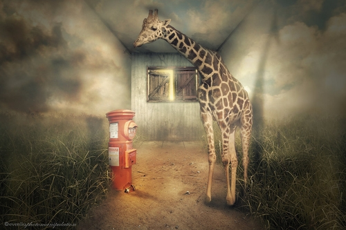 15-Mailing-Even-Liu-Surreal-Photo-Manipulations-and-the-Lantern-www-designstack-co