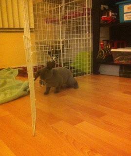 bunny on hardwood floor