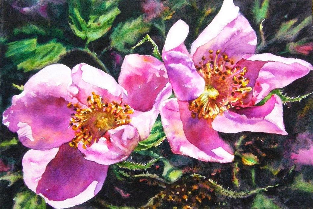 Sunny Alberta - Roses #13