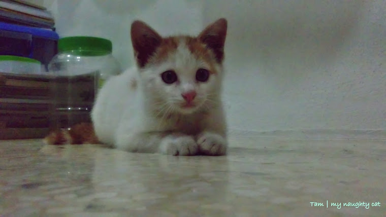 Miss you my lovely cat :'(