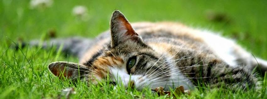 Belle couverture facebook animaux le chat