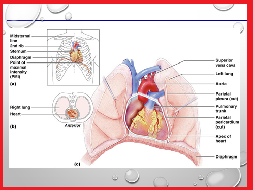 Telemetry Technician Course: Cardiac Anatomy and Physiology Part 01 ...