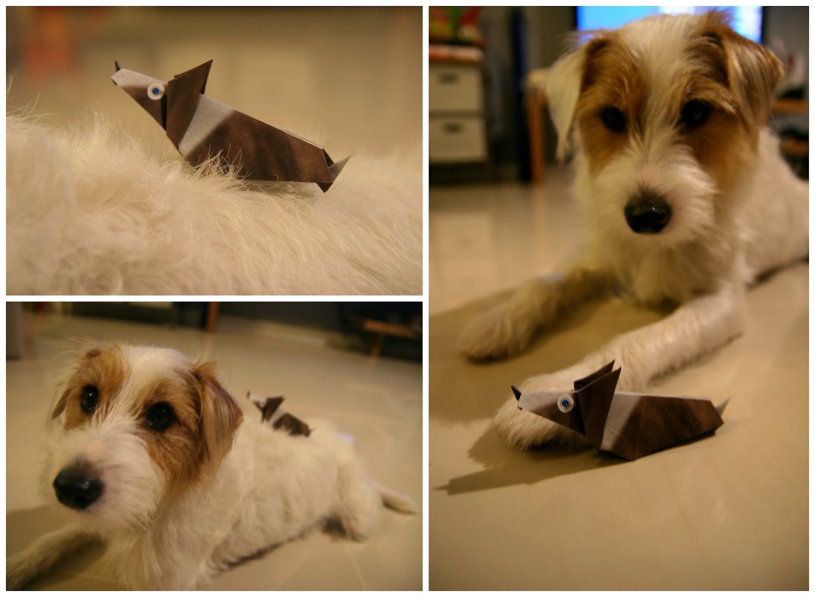 my origami pet dogs sam pecan and pippin dog blog. Black Bedroom Furniture Sets. Home Design Ideas