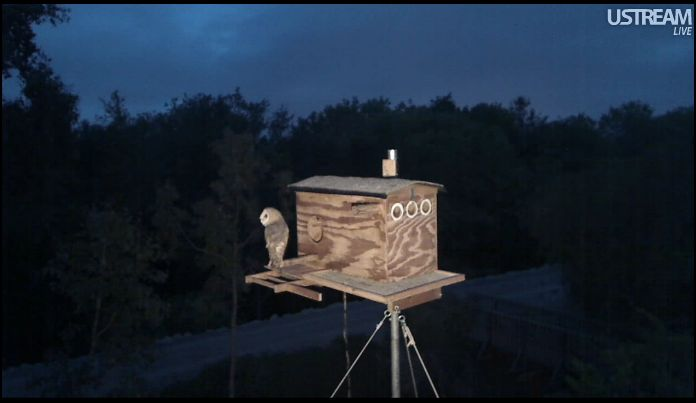 OUR OWL BOX ©