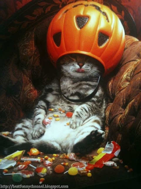Cat after Halloween.