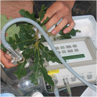 Növényi ökofiziológiai kutatócsoport