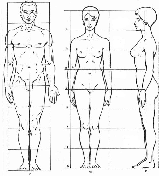 Corso di grafica e disegno per imparare a disegnare come for Medidas ergonomicas del cuerpo humano