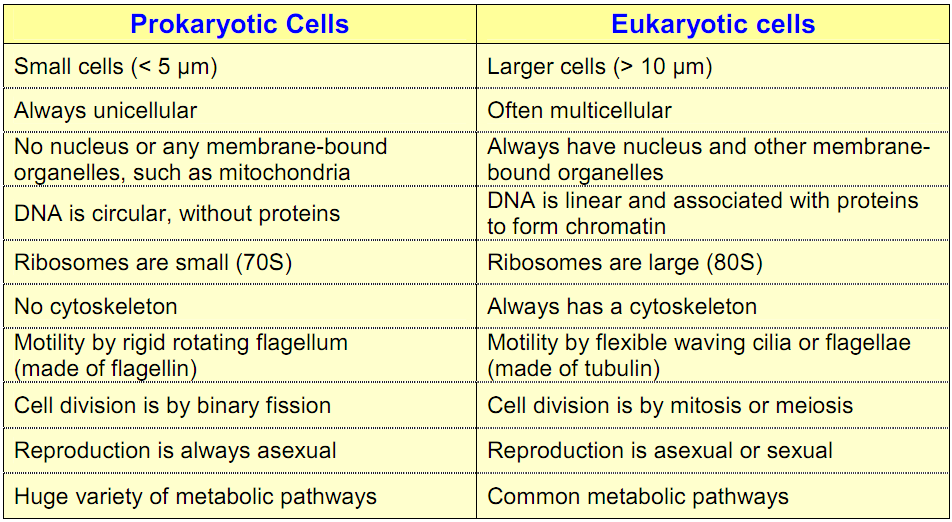 examining transcription in prokaryotes and eukaryotes biology essay Transcription is of interest in the context of transcription and maturation of mrna in been extensively researched in both prokaryotes and eukaryotes.