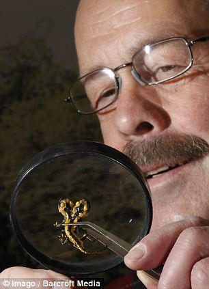 بالصور: العثور حشرة برأسين تثير