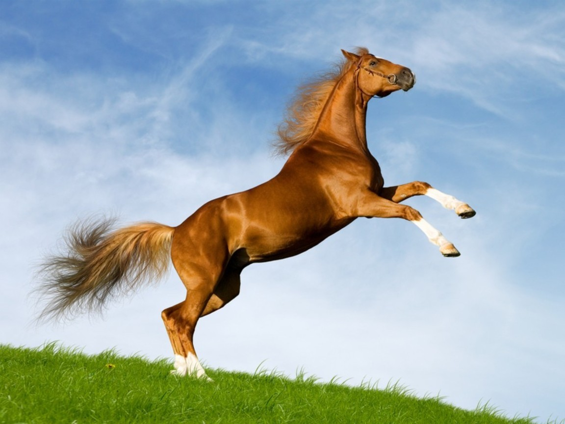 13 amazing horse wallpapers hd tapandaola111