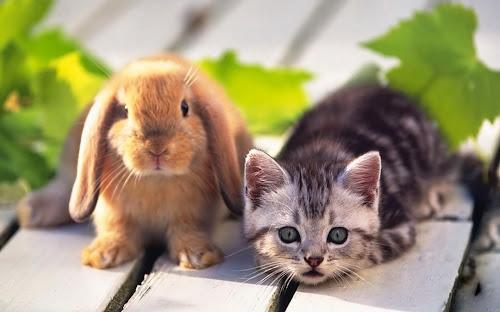 Kumpulan Gambar Kelinci Imut Terbaik
