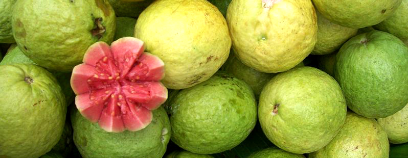 Flavors of brazil fruits of brazil guava goiaba fruits of brazil guava goiaba ccuart Image collections