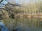 Pollancres reflectits al Llobregat