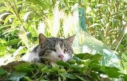 Katze ganz entspannt